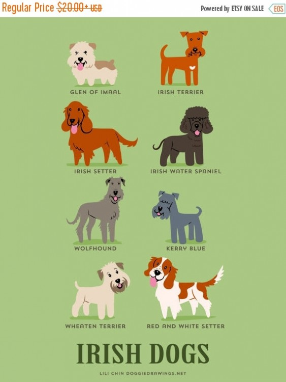 perros irlandeses