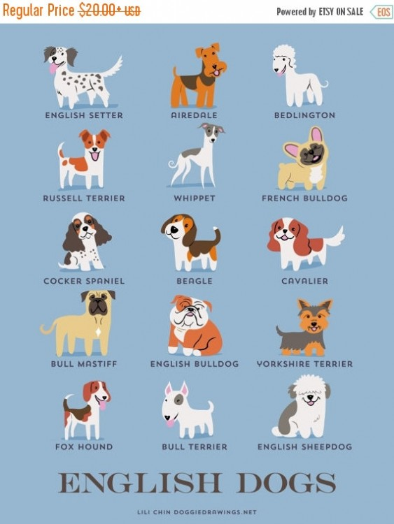 perros ingleses