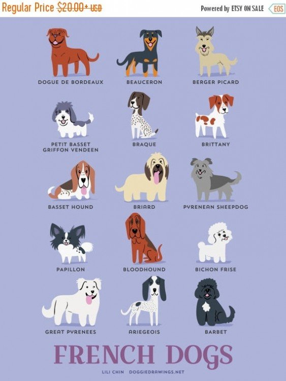 perros franceses