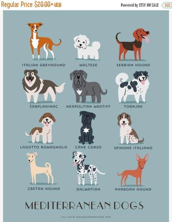 perros del meditarreaneo