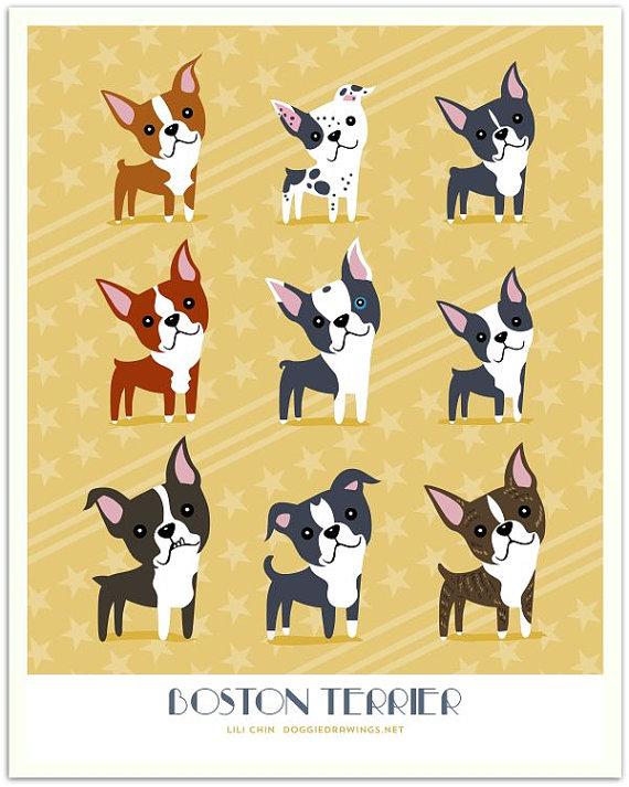 diversidad de boston terriers