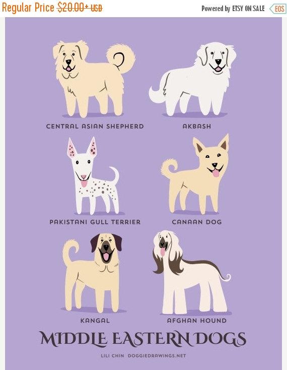 perros del medio oriente