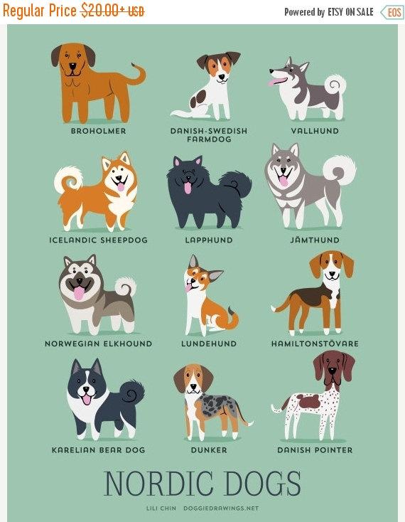 perros nordicos