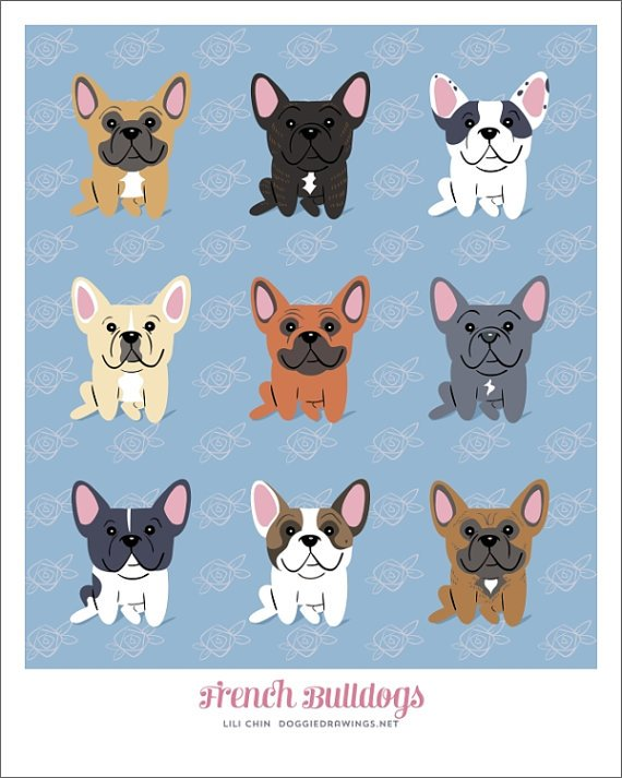 diversidada de Boston Terrier