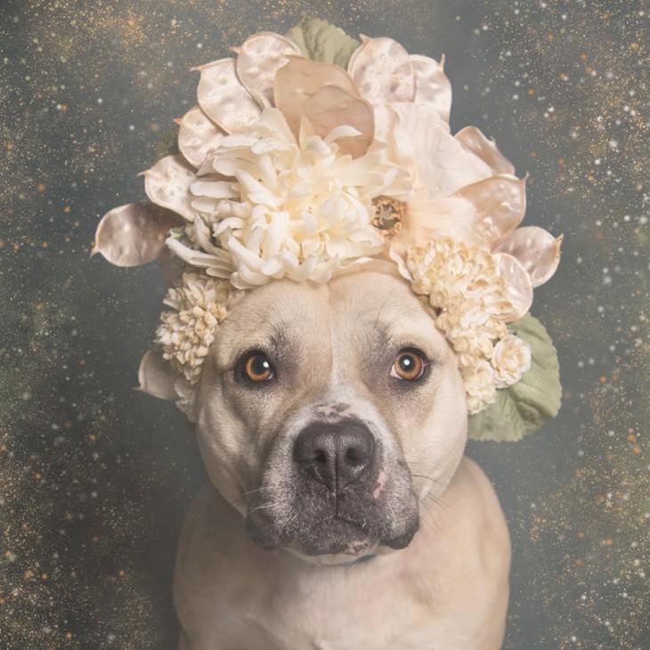 Corona de flores beige en perrita café claro