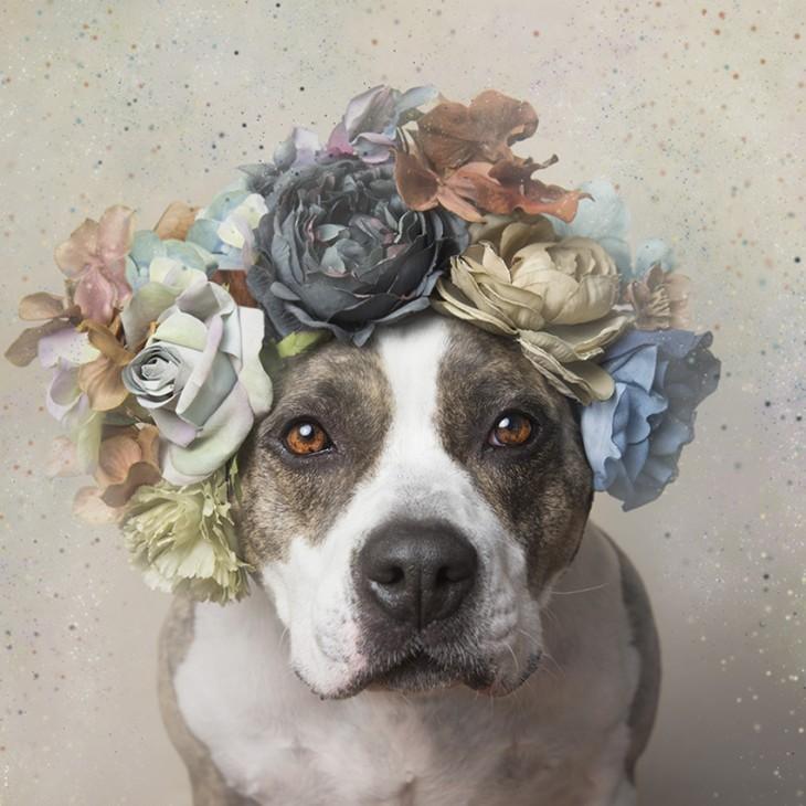 PitbullFlowerPower perro con manchas en los ojos y corona de flores en varios tonos
