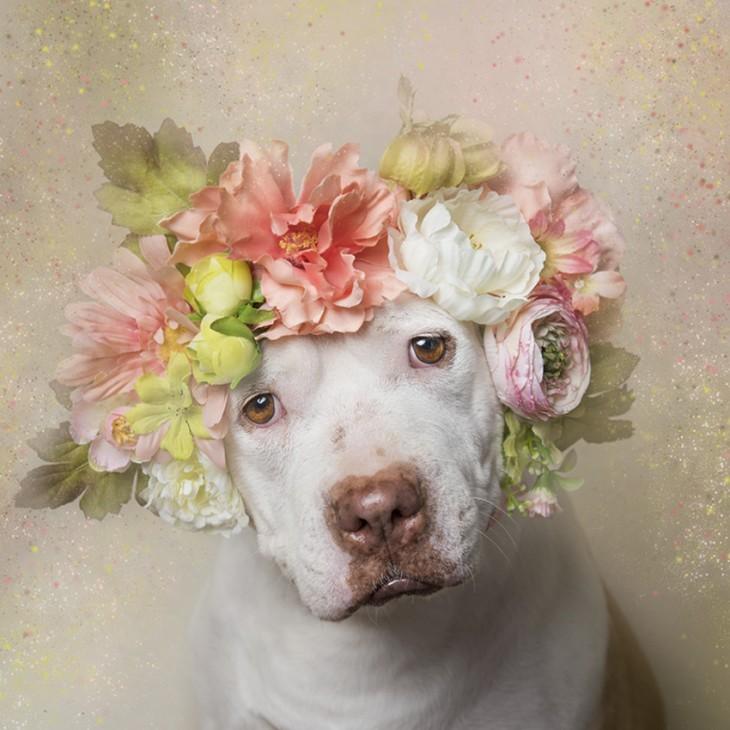 PitbullFlowerPower perrito blanco con corona en tonos rosa, naranja y verde