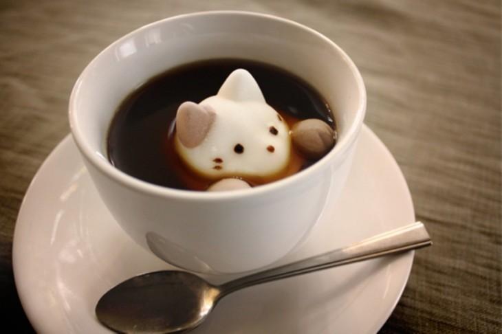 gato en el café