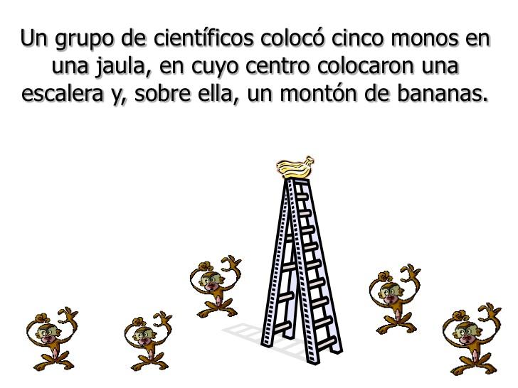 historia de los cinco monos