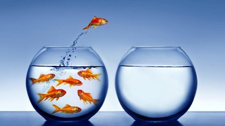 Un pez saltando de una pecera a otra