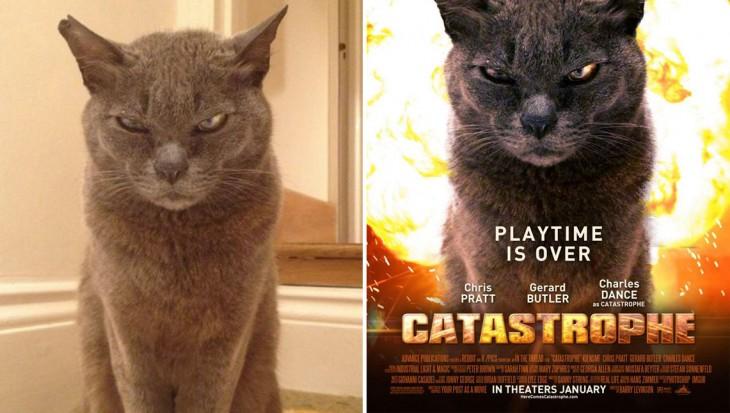 imagen de un gato convertida en un poster de la película Catastrophe