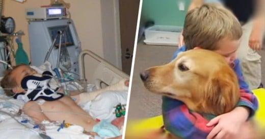 niño logra recuperarse de un terrible accidente gracias a un perro