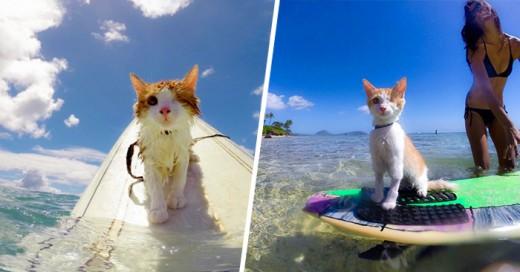 Gato Tuerto Le Encanta Nadar Y Surfear En Hawái