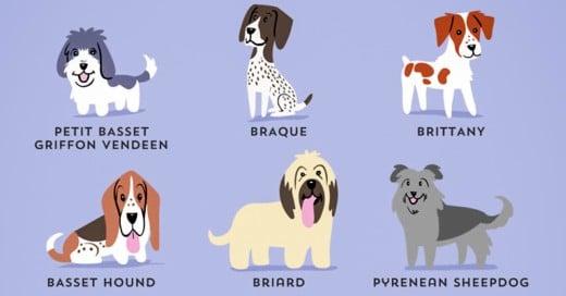 conoce el origen de las razas de 200 perros