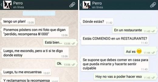 whatsapp con perro