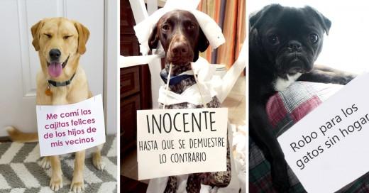 El muro de la vergüenza de los perros