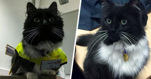Felix la gata que es oficial de pestes de la Estación de trenes de Huddersfield en West Yorkshire, Reino Unido