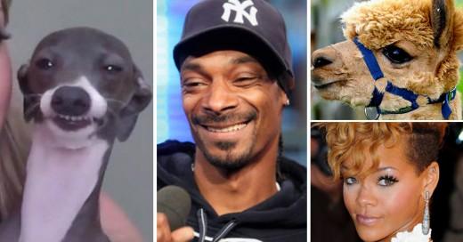 Animales idénticos a celebridades