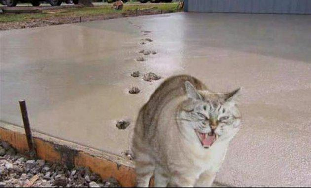 gato deja sus huellas en cemento fresco