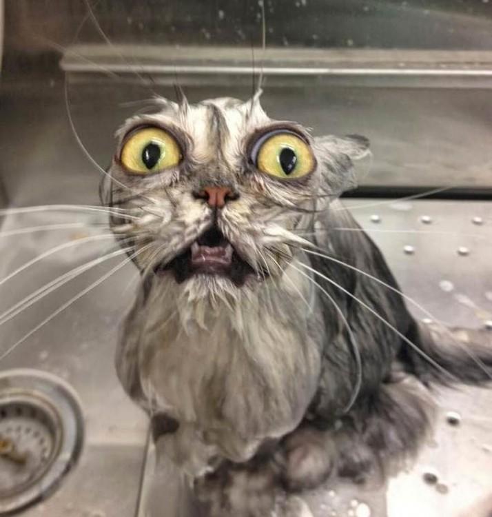 gato con la cara de asustado