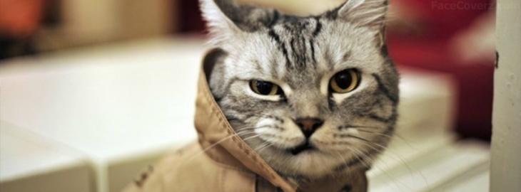 gatos con gabardina