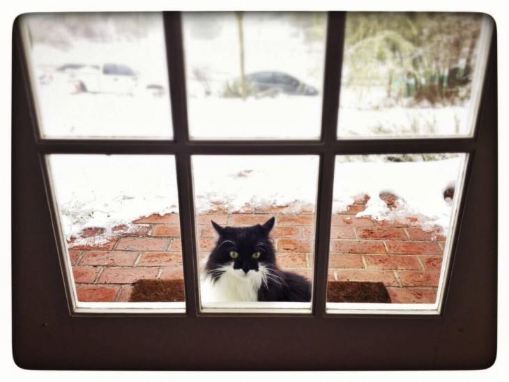 Constantemente quieren entrar... o salir