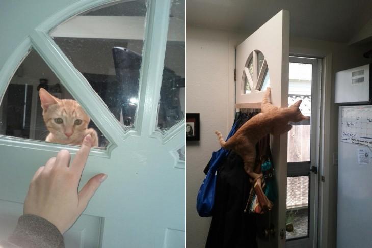 gato esperando a su dueño montado en la puerta