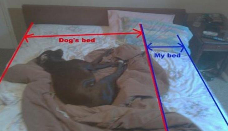 CÃO dormindo na cama TOSA