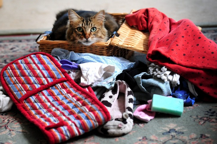 gato en canasta rodeado de cosas que ha robado
