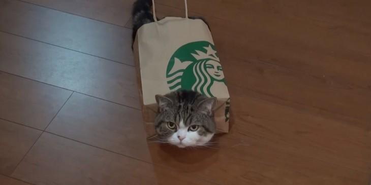 gato adentro de bolsa de starbucks
