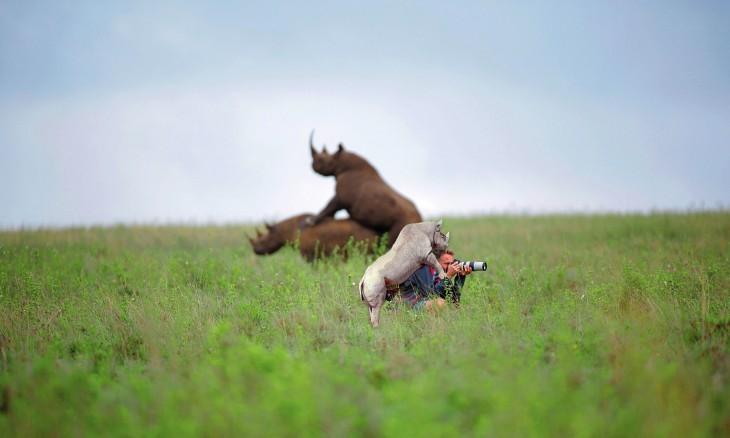 batalla de reddit en donde el fotógrafo es acosado por un rinoceronte