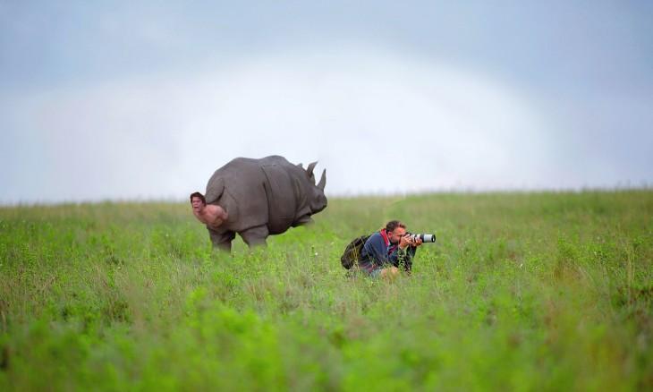 rinoceronte pariendo