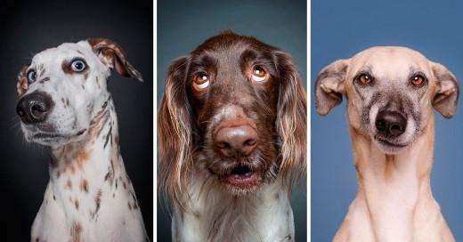 Elke Vogelsang's fotografías donde los perros se cuestionan el por que les toman fotos