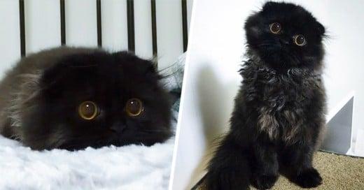 Gimo, el gato con los ojos más grandes del mundo