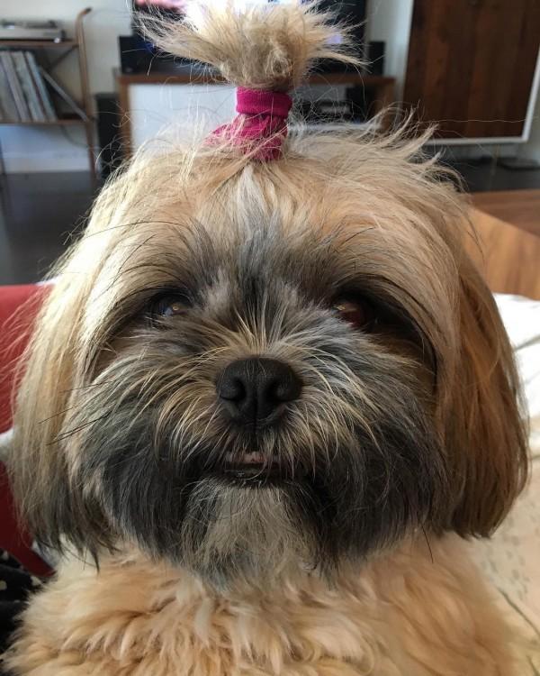 cabeza de un perrito con un chongo