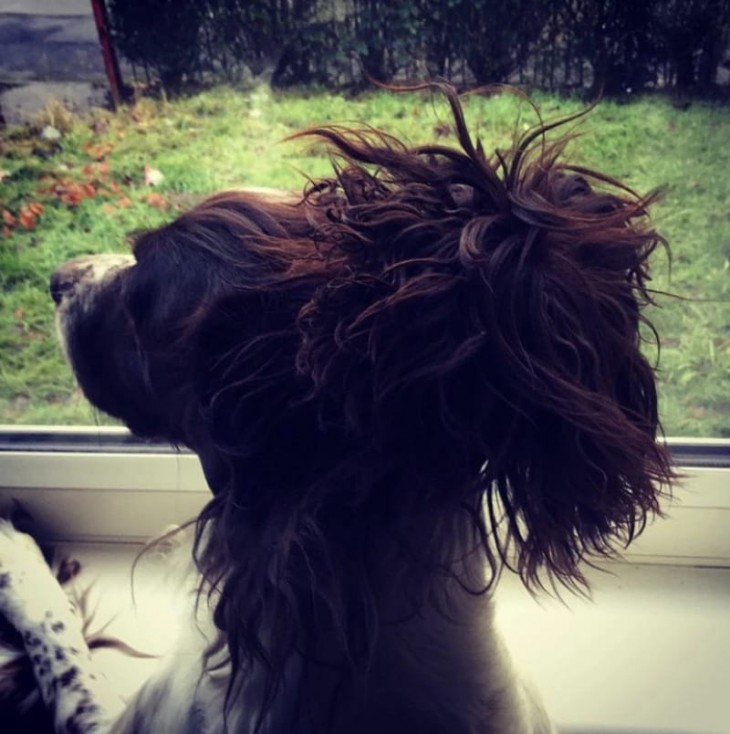 fotografía de un perro con un chongo hecho con su cabello
