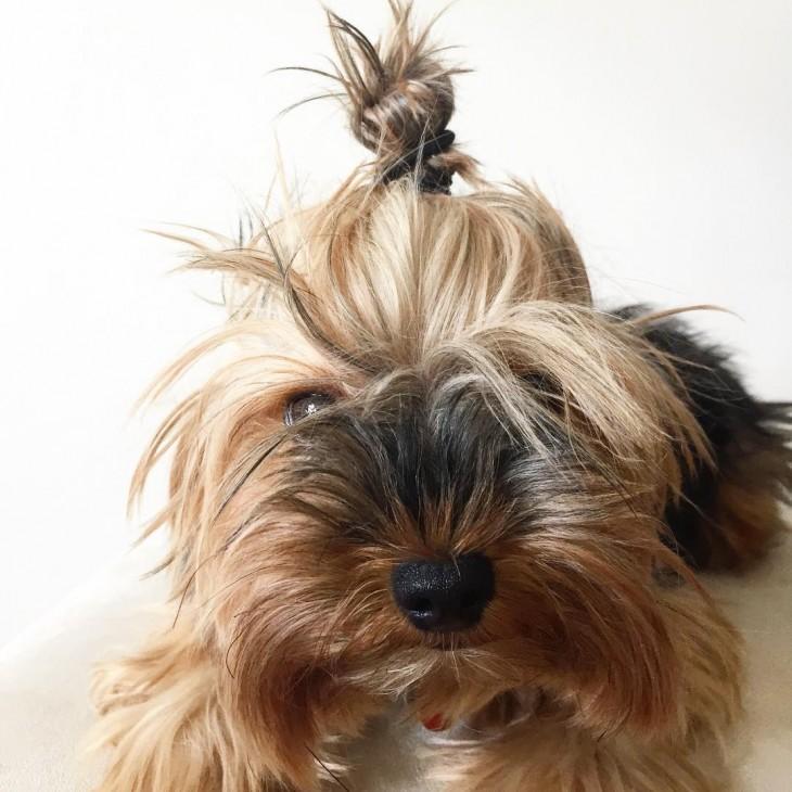 cabeza de un cachorro mostrando su chongo