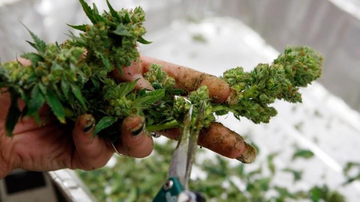 en algunos lugares del mundo el cannabis se usa como remedio medicinal
