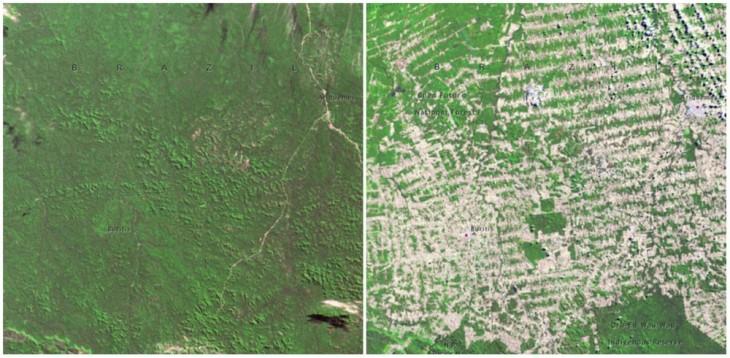 imagen del antes y ahora del Bosque en Rondonia, Brasil