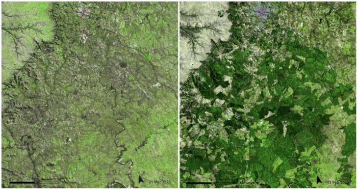 Bosques de Uruguay, Marzo de 1975 y febrero de 2009