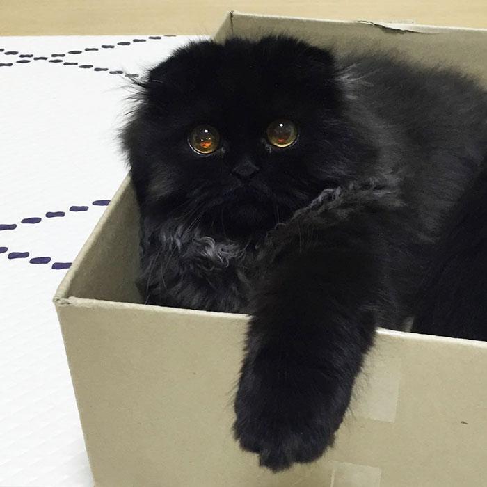 gimo dentro de una caja de cartón