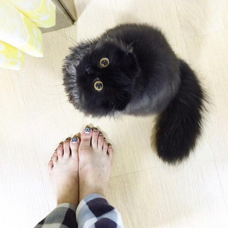 gimo con los pies de su dueña