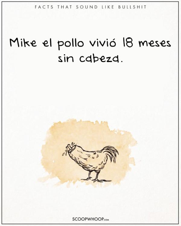 UN POLLO DURO 18 MESES SIN CABEZA