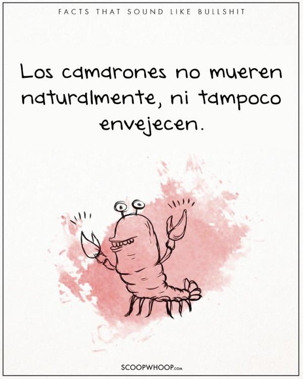 LOS CAMARONES NO MUEREN POR CAUSAS NATURALES NI POR VEJEZ
