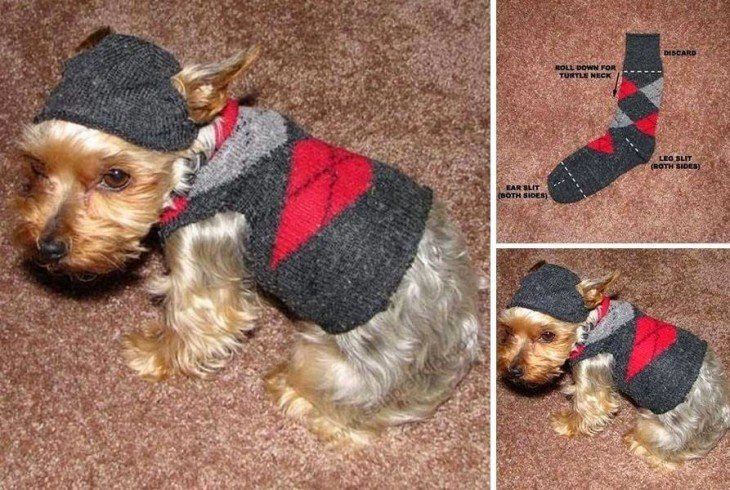 calcetín convertido en un hermoso suéter para perro