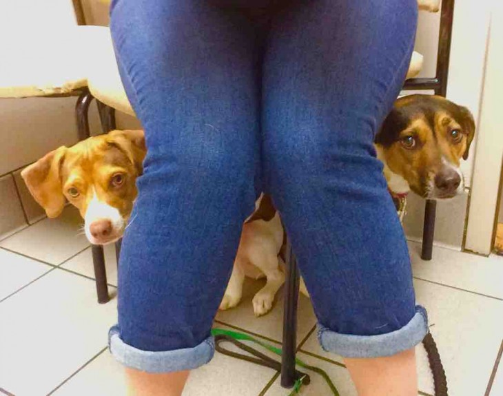 perros escondiéndose de su médico