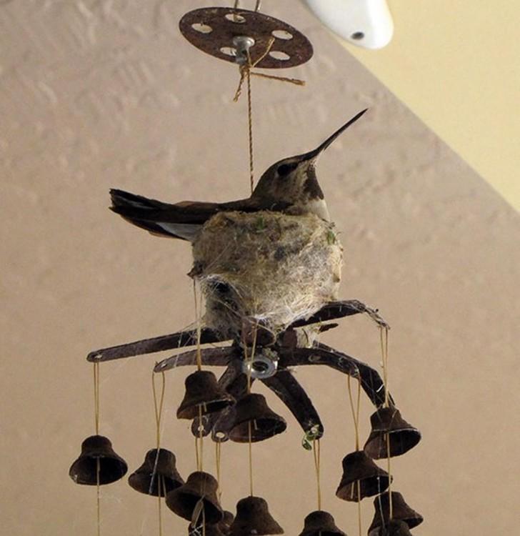 nido de pájaro sobre un adorno de techo