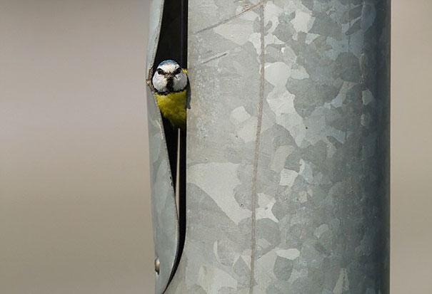 Nido de ave dentro de un poste