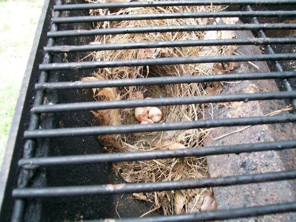 nido de pájaro debajo de una parrilla