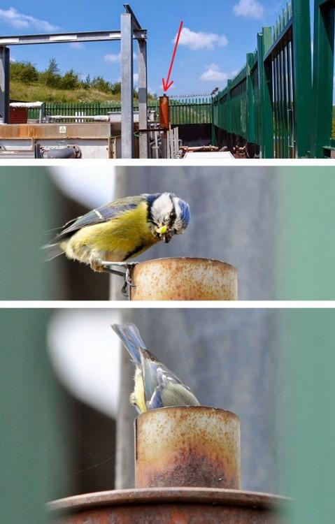 nido de una ave dentro de un escape de coche